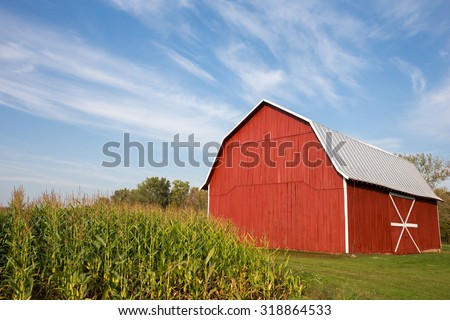 Red barn standing near late-summer corn with a dramatic blue sky in the upper frame.  White accents on barn.  Copy space in sky if needed. - stock photo