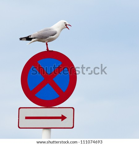 """Red-billed gull, Chroicocephalus scopulinus, standing with open beak on top of """"No stopping"""" traffic sign with plenty of copyspace - stock photo"""