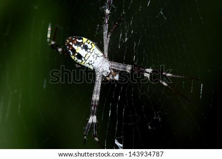 red-black spider in her spiderweb - Argiope bruennichi - stock photo