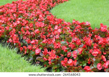 Red blooming flowerbed flowers 7902 - stock photo