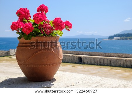 Red blooming geranium in a pot on the wall of Corfu Old Fortress with the Ionian sea at the background, Greece. - stock photo