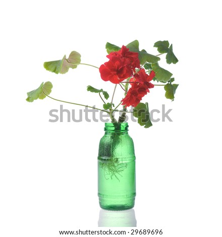 red blooming seedling in green bottle isolated on white - stock photo
