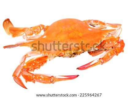 red boiled crab isolated on white background - stock photo