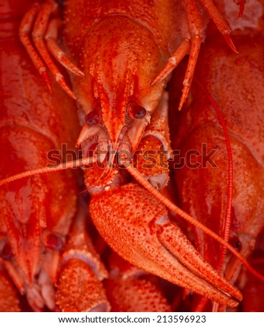 red boiled crayfish - stock photo