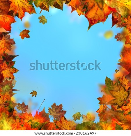 Red brown and yellow maple leaves, autumnal frame, golden autumn background - stock photo