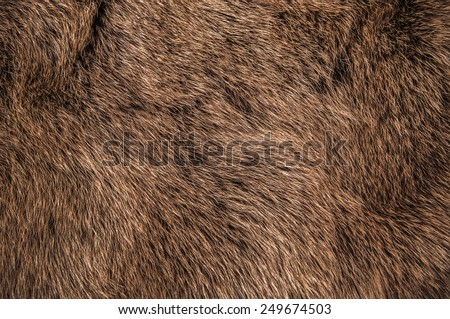 Red Brown Grey Wolf, Fox, Bear Fur Natural, Animal Wildlife Concept and Style for Background, textures and wallpaper. / Close up Full Frame. - stock photo