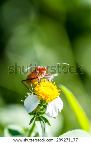 Red bug on green leaf - stock photo