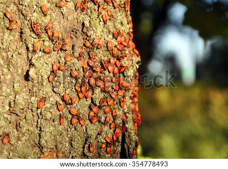 red bugs sitting on the tree trunk - stock photo