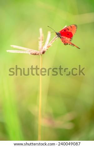 Red butterfly on glass flower in field - stock photo