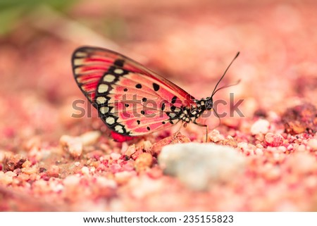 Red butterfly on sand beach   - stock photo
