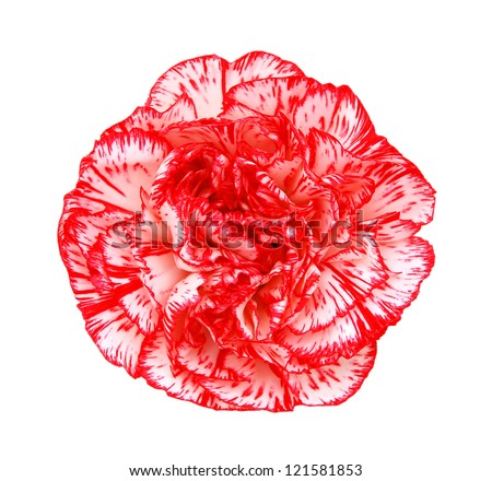 Red carnation on white - stock photo