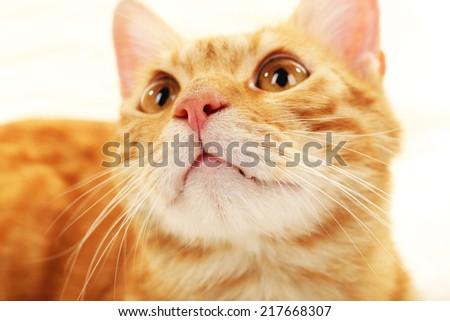 Red cat closeup - stock photo