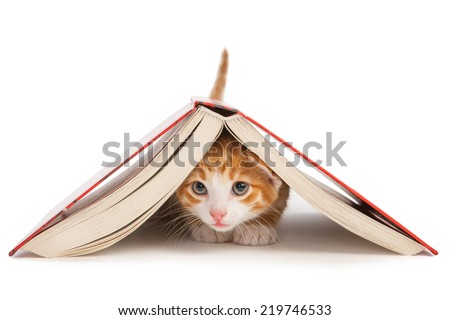 Red cat crawled under the book - stock photo