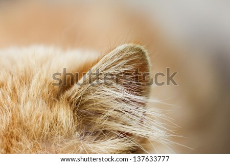 red cat ear. macro - stock photo