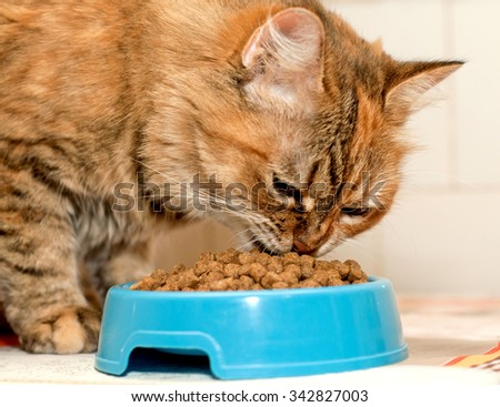 Red Cat eats dry food from blue bowl - stock photo