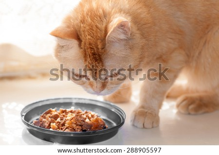 red cat eats food from grey  bowls - stock photo