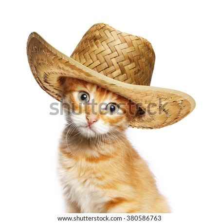Red cat in wicker straw hat, isolated on white background - stock photo