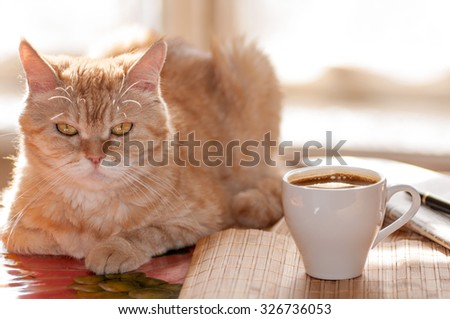 red cat lies on the table next to the Cup of coffee,pen and newspaper against the window in the morning - stock photo