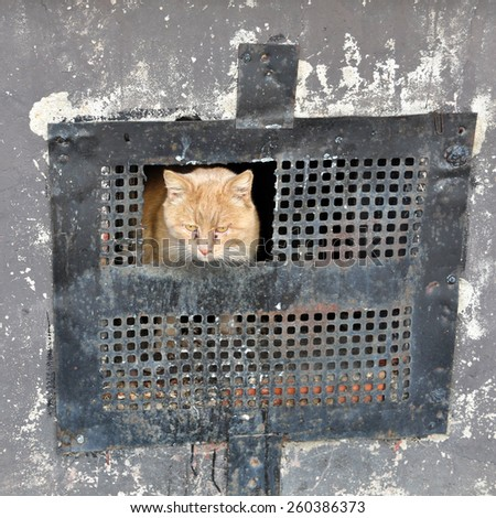 Red cat looks out of the cellar - stock photo