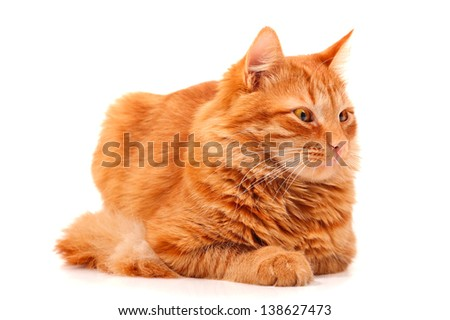 Red cat lying and posing at studio, white background - stock photo