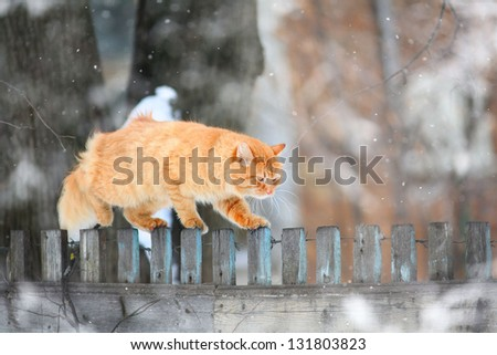 red cat on a wooden fence - stock photo