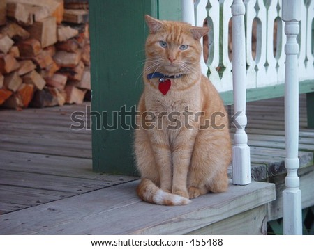 Red cat on porch - stock photo
