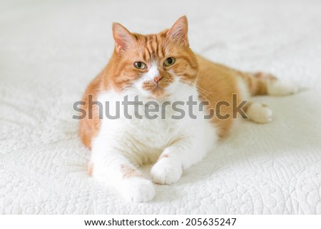 Red cat on white  - stock photo