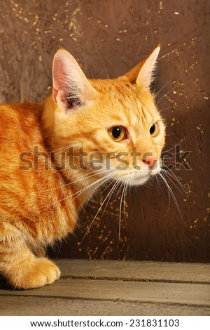 Red cat on wooden box on brown wall background - stock photo
