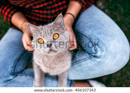 Red cat sitting on hands of the girl. Red cat sitting on hands of the girl - stock photo