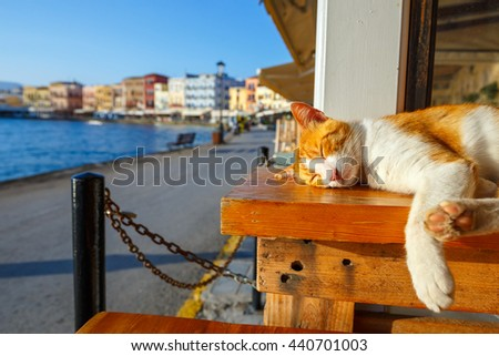 Red cat sleeps on a bench in the early morning - stock photo