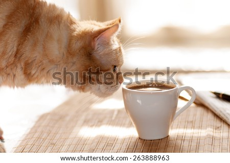 red cat sniffing a mug of black coffee while standing on a table with paper and pen - stock photo