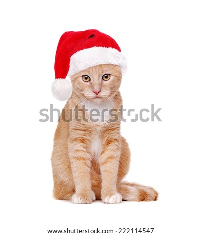 red cat wearing santa hat - stock photo