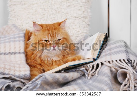 Red cat with books on sofa inside - stock photo