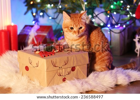 Red cat with Christmas gift - stock photo