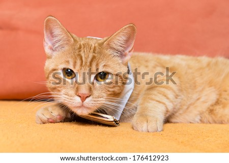 Red cat with tie sitting on a orange couch - stock photo
