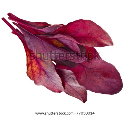 red chard salad (Mangold)   isolated on white background - stock photo