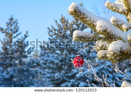 Red Christmas ball on a snow-covered tree branch - stock photo