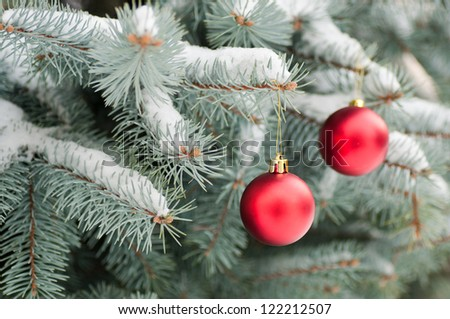 Red Christmas balls  on blue spruce. - stock photo