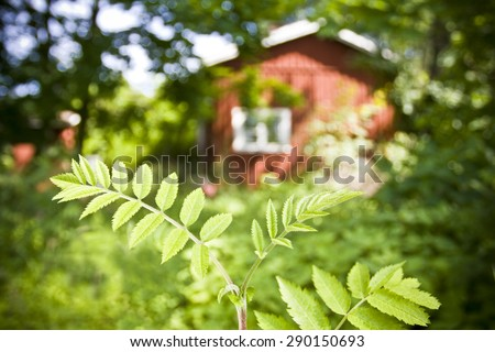 Red cottage in the woods - stock photo