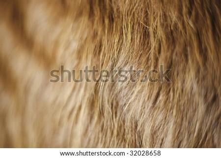 Red Cow DOF - stock photo