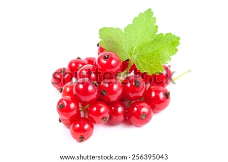 Red currant superfood isolated white background - stock photo