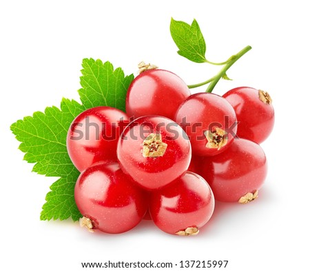 Red currants isolated on white - stock photo