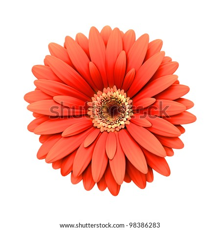 Red daisy flower isolated on white background - 3d render - stock photo