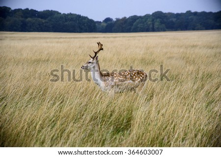 Red deer  - stock photo