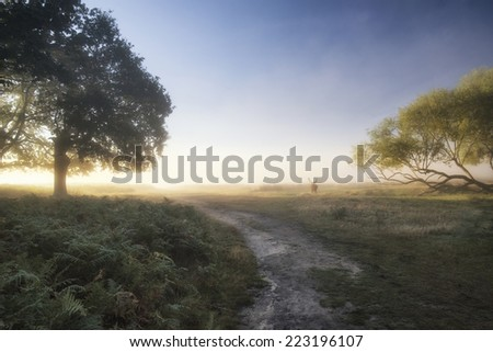 Red deer stag in landscape on Autumn Fall foggy sunrise morning with stunning soft light  - stock photo
