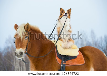 Red dog on the red horse - stock photo