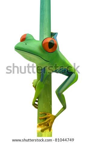 Red eyed tree frog on bamboo bole isolated over white - stock photo