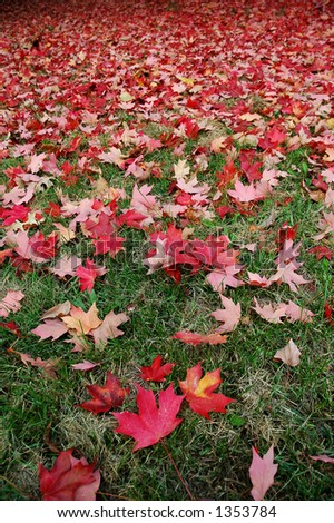 Red Fall Leaves on Green Grass (focus on foreground leaves, vertical orientation) - stock photo