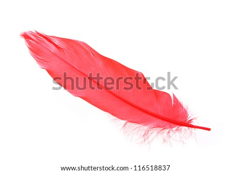 Red feather isolated on white - stock photo