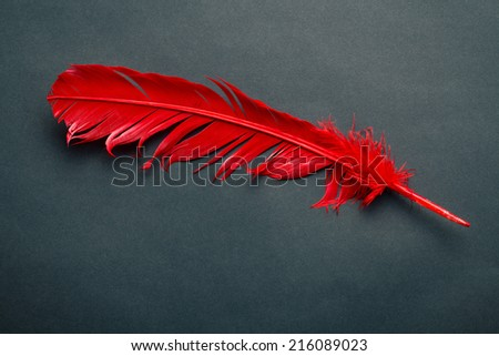 red feather on black background - stock photo